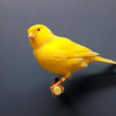Bird Stands